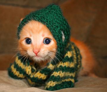 KnittedKitten