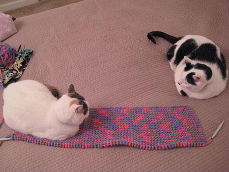 Charlie & Kennedy w/Blanket