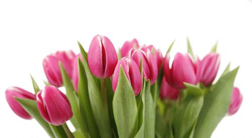 Image: Clare Bloomfield / FreeDigitalPhotos.net