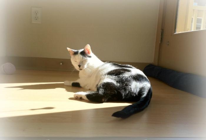 Kennedy Sunbathing
