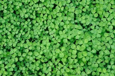 Image: federico stevanin / FreeDigitalPhotos.net